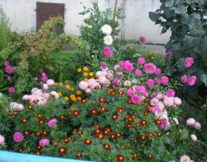 цветы, как дети - беззащитны и красивы